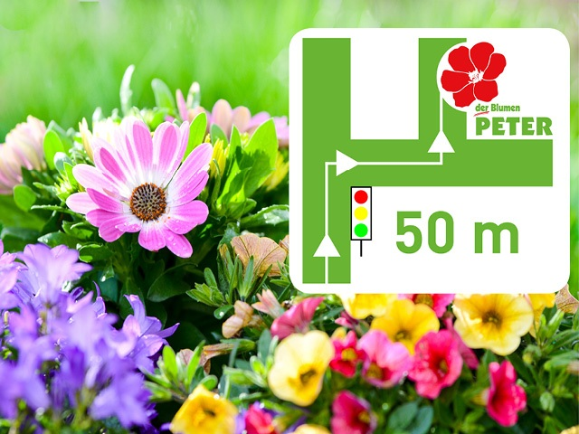 Blumen-Peter-Wegbeschreibung